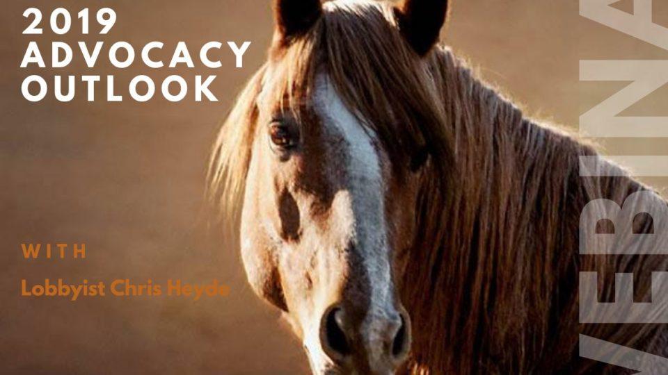 2019 advocacy outlook webinar