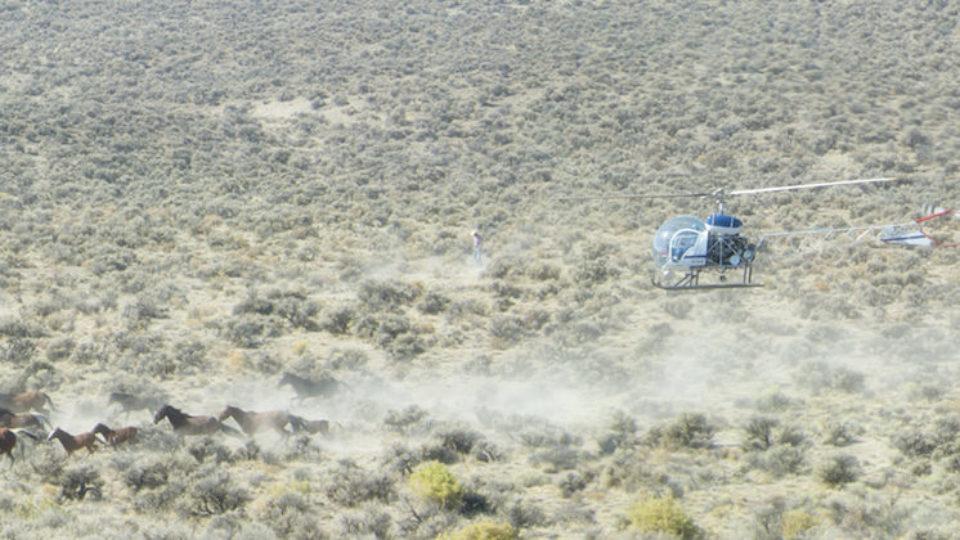 Paisley Desert Wild Horse Gather