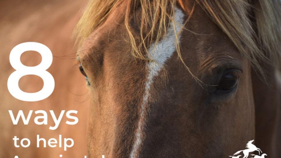 8-ways-to-help-americas-horses-copy-2