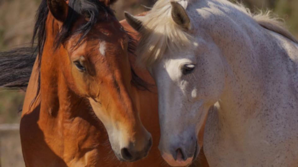 BLM-budget-2018-Am-flag-horse