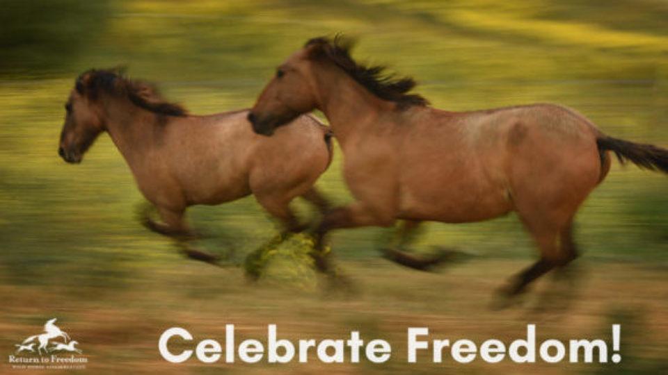 Celebrate Freedom