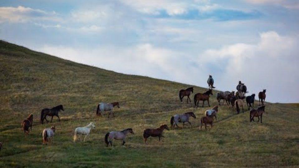 SLO herd copy 600