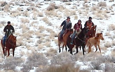 The American Wild Horse Wipeout