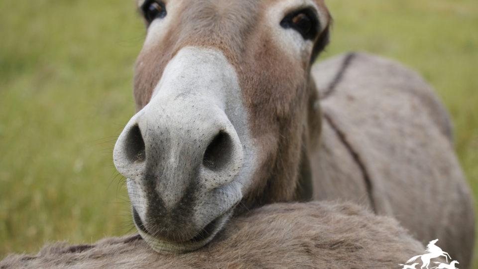 burro-smile