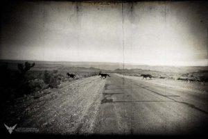 Cold Creek Herd