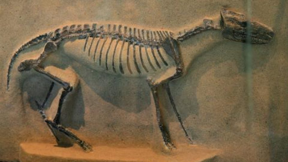 Equine Evolution