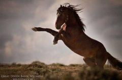 Wild Stallion, Wyoming, Photo: Kimerlee Curyl