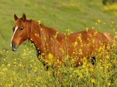 Hart Mountain Herd