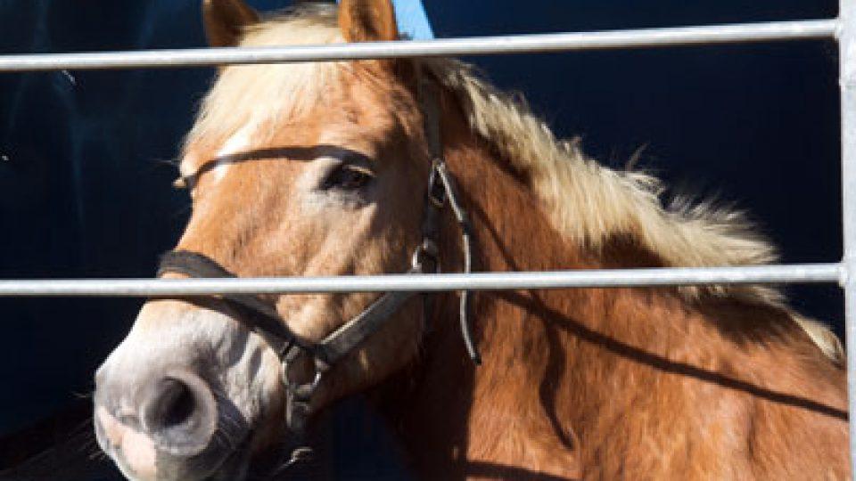 Horses in the Headlines