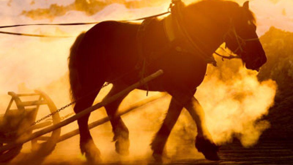Horse Marsha A Levine