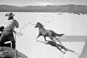 Wild Horse Issue