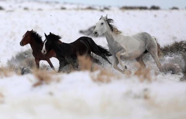 newsweek wild horses