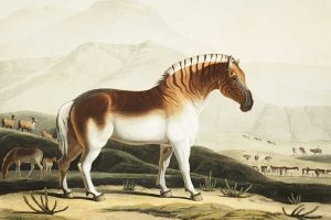 Extinct Breeds