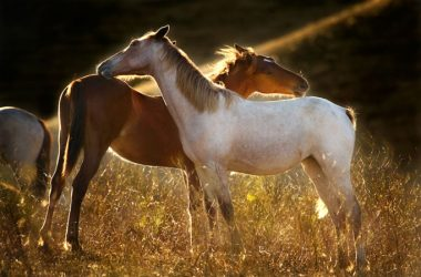Two horses at Return to Freedom