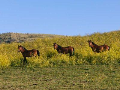Virginia Range Herd