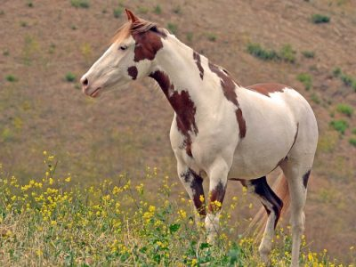 Wilbur-Cruce Spanish Colonial Mission Horses