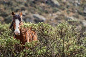 Wild Horse Nation