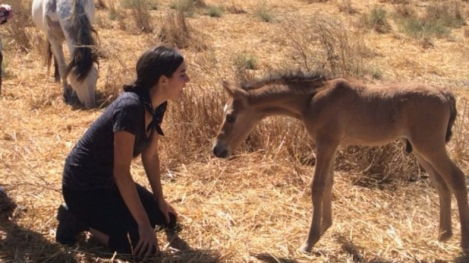 with-foal